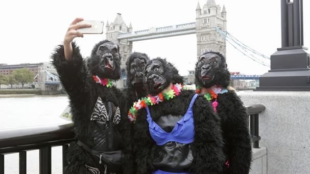 Participants in fancy dress stop to take a selfie by City Hall, London, during The Great Gorilla Run.