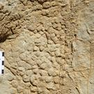 An impression of dinosaur scales that were left in a muddy river bank in Spain 66 million years ago