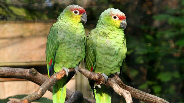 Today's parrots prefer the tropics but the fossil shows they once lived as far north as Siberia
