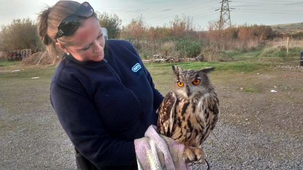 Inspector Gemma Cooper with a European eagle owl that was found by a member of the public