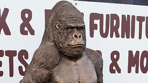 The gorilla was taken from a car park
