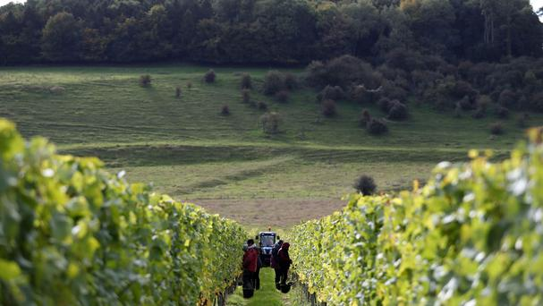 Experts mapped changes to British viticulture over the next 85 years