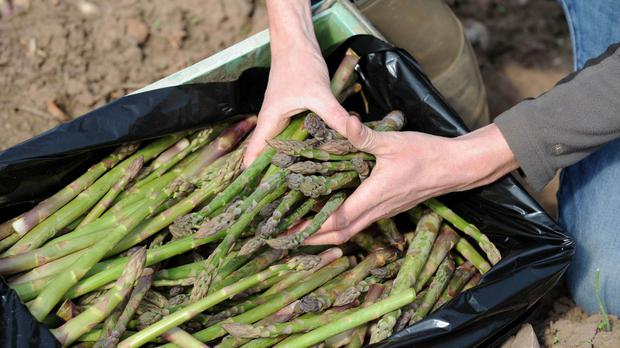 Asparagus has long been associated with producing a distinctive smell in the urine of those who eat it.