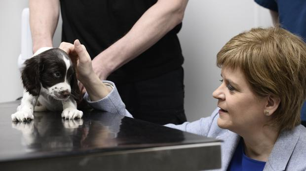 First Minister Nicola Sturgeon met springer spaniel puppy Pippa as she opened the extension at the Scottish SPCA's centre in Cardonald, Glasgow (Scottish SPCA/PA Wire)