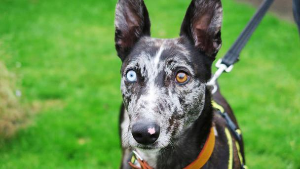 Bowie has been named after the late singer (Dog's Trust/PA Wire)