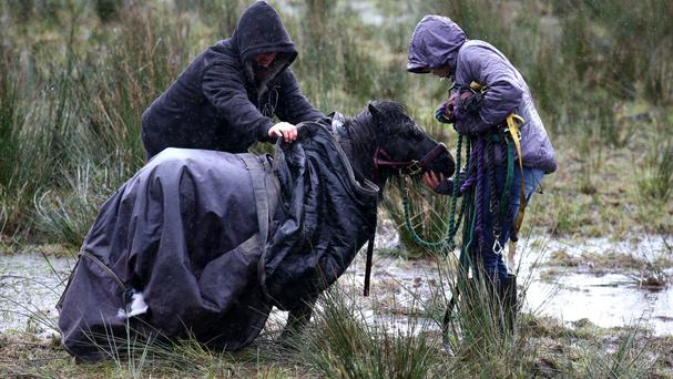 Nemo being led away after being rescued by firefighters from a swollen river