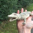 A plastic crocodile toy that was found by an RSPCA officer after reports of a baby crocodile at the side of the road.