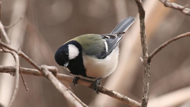 Songbirds always seem full of the joys of spring, regardless of the calendar
