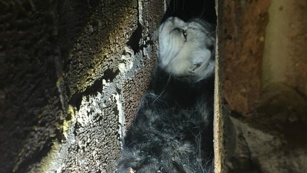 Mickey the cat became wedged in a gap between two walls. (RSPCA/PA)