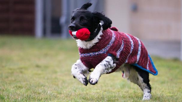Knitters from the Scottish Women's Institutes is creating colourful woollen jackets for dark dogs to transform their look (PA/Scottish SPCA)