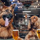 Craft brewing company BrewDog is offering staff a week of paid 'paw-ternity leave' if they get a new dog (PA/BrewDog)