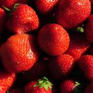 Technological improvements and mild temperatures mean that producers across the UK will be supplying strawberries from the end of February