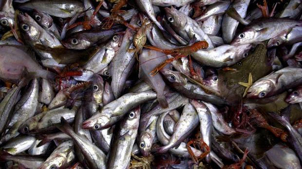 A major drive to 'take back control' of UK fisheries was considered key to the outcome of the Brexit referendum last June. Stock photo