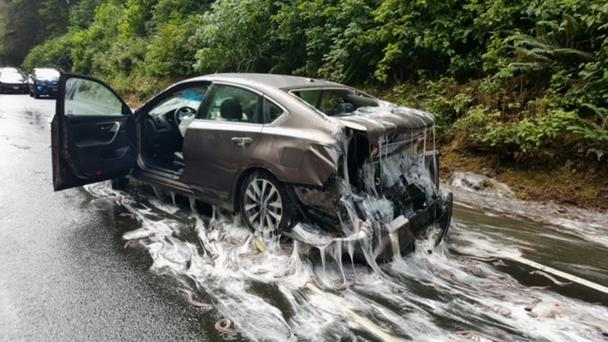 The container of eels hit the vehicle on Highway 101 in Oregon (Oregon State Police/AP)