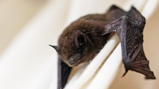 a small bat in a house