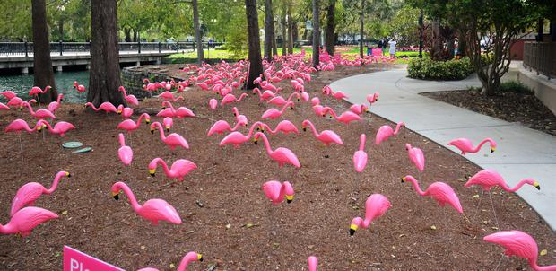 Pink flamingoes stand in Lake Eola Park in Orlando, Florida (Florida Hospital)