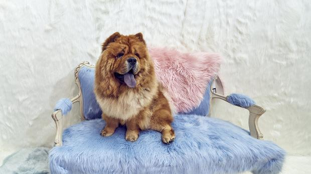A dog in the Fluffytorium