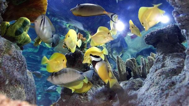 Fish gather round the glass at the Deep Millennium Project in Hull