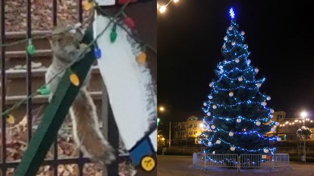 A squirrel and a Christmas tree