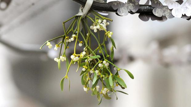 In our experience, mistletoe coercion is not A Thing