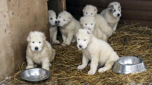 Some puppies from the video