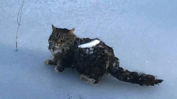 A cat frozen to the ice in Newton, New Hampshire (Newton NH Police Department/PA)