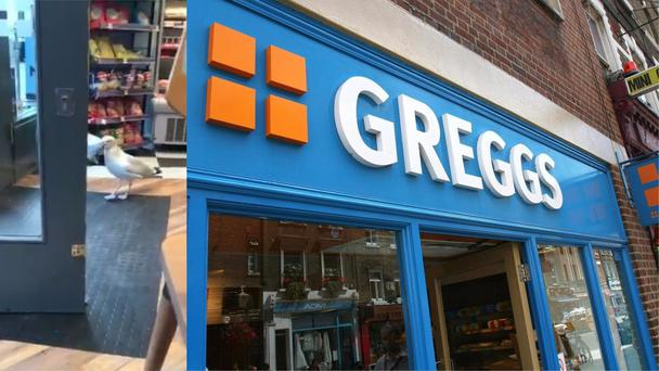 Seagull steals crisps from Ayr Greggs (Caitlin Hamilton/Tim Ireland/PA)