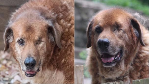 Captain Ron lived to the ripe old age of 14 (Old Friends Senior Dog Sanctuary/PA)