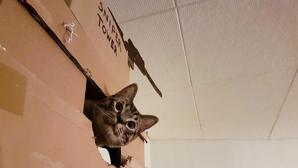 Cat with head popping out the fort