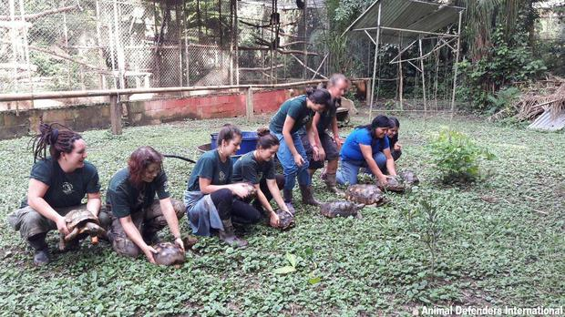 Tortoises being released in Peru (Animal Defenders International)
