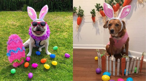 Some dogs in their Easter gear