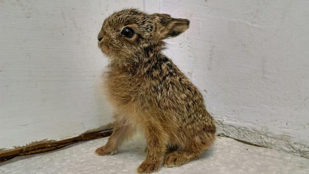 Kenny Leveret was found shivering and wet in a garden. (RSPCA/PA)