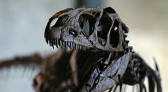 "Iacopo Briano: ""Dinosaurs have become cool, trendy – real objects of decoration, like paintings"" (stock picture)"