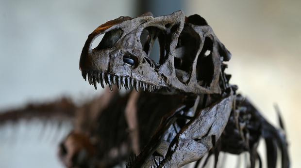 """Iacopo Briano: """"Dinosaurs have become cool, trendy – real objects of decoration, like paintings"""" (stock picture)"""