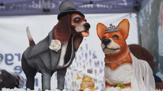 Two cakes which look like corgi dogs dressed as bride and groom (AlexanderWard.com/PA)