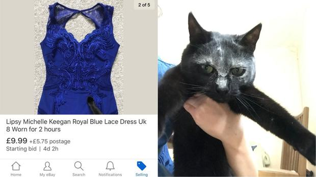 The dress advert and cat (Sophie Robinson/Twitter/PA)
