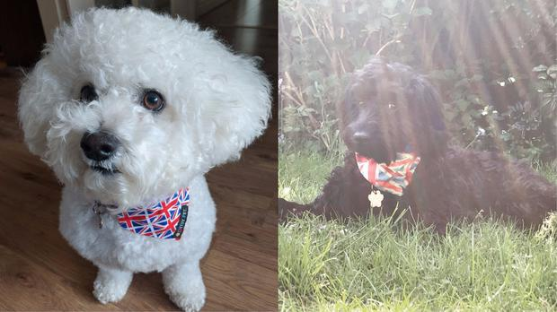 Dogs enjoying the royal wedding