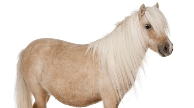 A pony isn't a baby horse and other revelations (GlobalP/Getty Images)