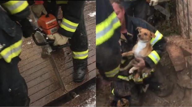 Scooter became trapped after trying to seek shelter during a thunderstorm (@SouthMetroPIO/Twitter)