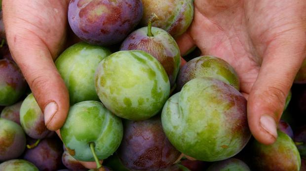 A poem about plums has sparked a rash of new versions. (Gareth Fuller/PA)