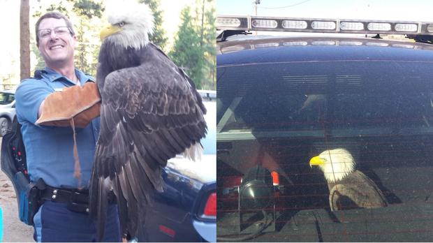SFC Hand with the bald eagle (Oregon State Police/PA)