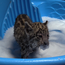 The adorable little felines were born at Cleveland Metroparks Zoo on April 22 (Cleveland Metroparks Zoo/Facebook)