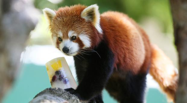 Which animal would you have as your pal if they suddenly had human intelligence?