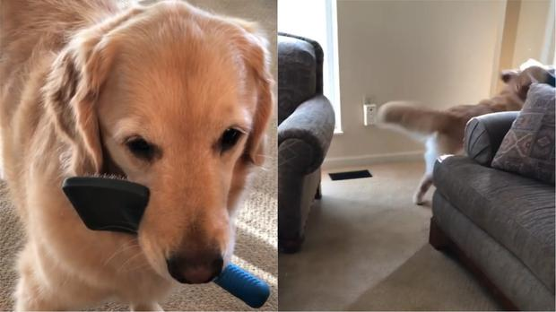 Meet Archie The Canine Viral Sensation Playing Keep Away With His