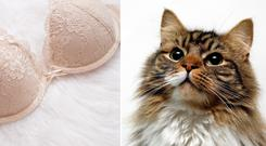 A tweet involving a cat and a bra is among our favourites (SomeMeans/Getty Images/Nick Ansell/PA)
