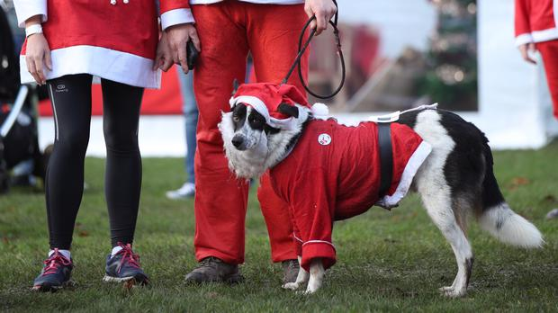 Participants and their dog taking part in the London Santa Run in Victoria Park, east London (Yui Mok/PA)