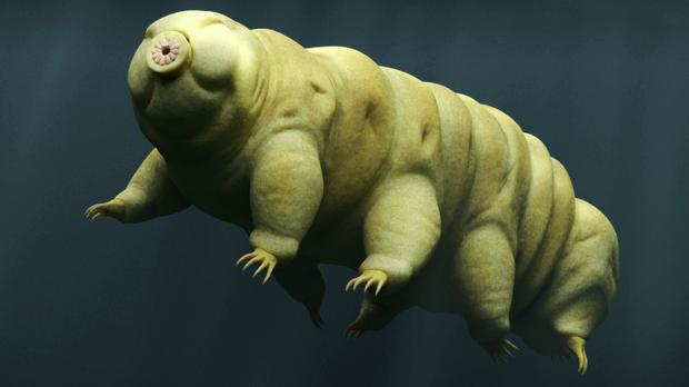 A tardigrade swimming in water (dottedhippo/Getty)