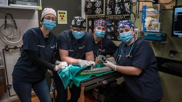 The vet team at the Vancouver Aquarium pose for a photograph with the mislaid toy snake (Vancouver Aquarium, an Ocean Wise initiative)