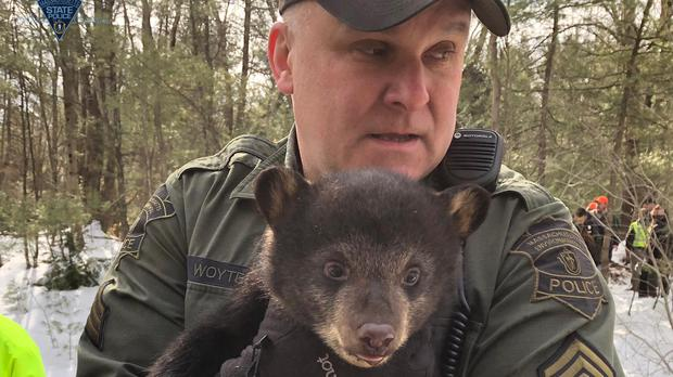Police shared images of the bears on their Facebook page (Massachusetts State Police/PA)