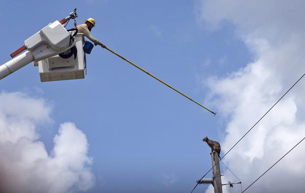 Bobcat poked down after climbing electrical pole in Florida
